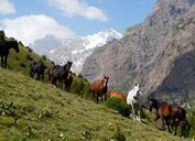 The valley Orto-Chashma, Pamir-Alay