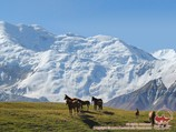 Horses on the Lukovaya meadow. Lenin peak, Pamir, Kyrgyzstan