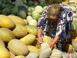 Узбекские дыни. Бахчевые культуры Узбекистана