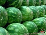 Pasteques et melons