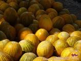 Melones uzbekos. Agricultura de Uzbekistán