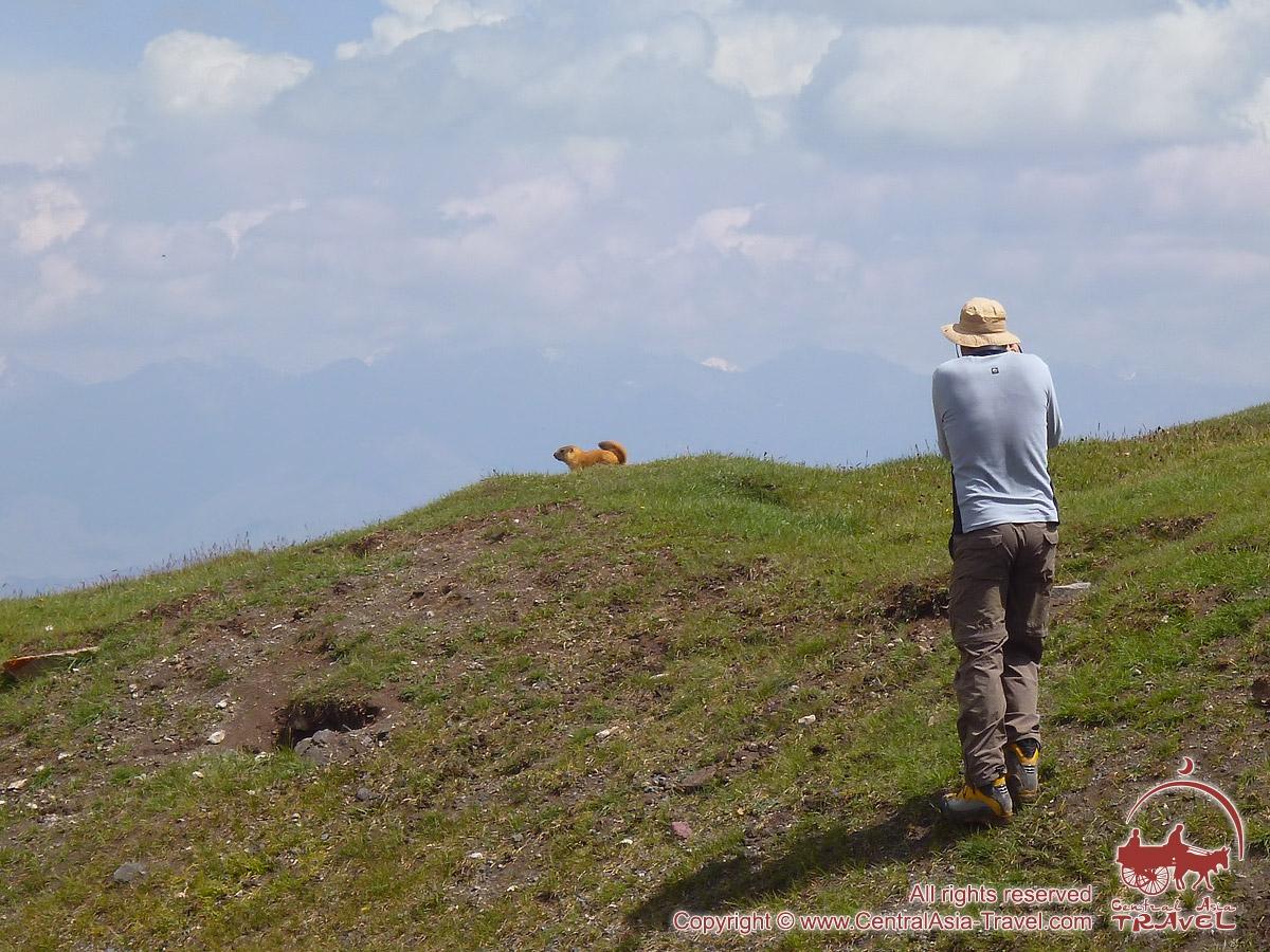 Сурки на Луковой поляне. Пик Ленина, Памир, Кыргызстан