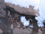 Snowy pompons