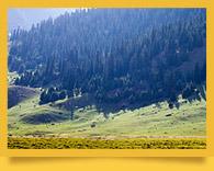 Долина Джууку