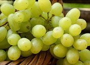 Grape Season Tour of Uzbekistan