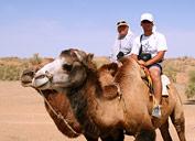 Reisen mit Kamelen