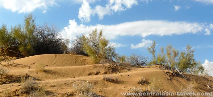 Wüste Kysyl-Kum. Reise nach Usbekistan