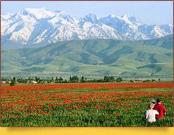 Маковые поля под Бишкеком