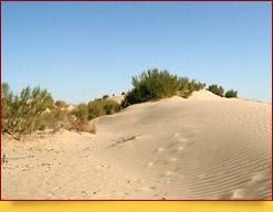 Пустыня Кызылкум Пустыни Узбекистана Пустыни Узбекистана