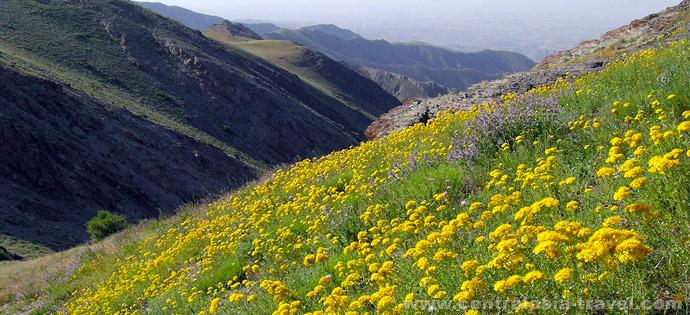 Долина Хаятсай, Нурата. Туры в Узбекистан