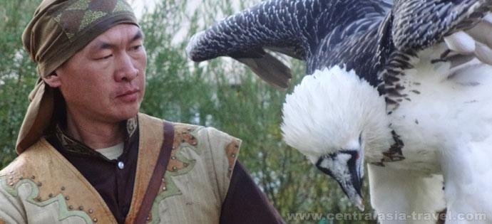 élevage de faucons