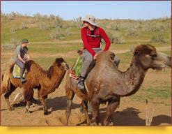 Катание на верблюдах. Пустыня Кызылкум, Узбекистан