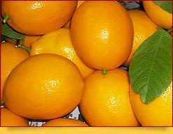 Uzbek Lemons
