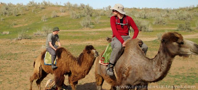 Катание на верблюдах. Юртовый  лагерь. Озеро Айдаркуль. Узбекистан. Туры в Узбекистан