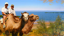 Camel Safari in Uzbekistan and Central Asia