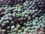 Raisin ouzbek. Viticulture en Ouzbékistan