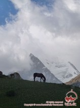 The horse on the mountains background. Pamir-Alay area, Kyrgyzstan