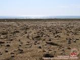 Аральское море, Узбекистан