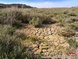 Такырная почва. Пустыня Кызылкум, Узбекистан