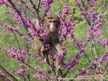 Zoo de Tachkent
