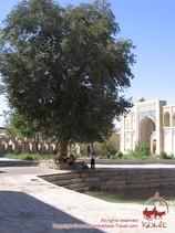 Ensemble Khodja-Gawkouchan. Boukhara, Ouzbékistan