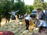 Melones de Uzbekistán. Agricultura de Uzbekistán