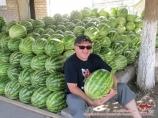 Uzbek watermelon. Melons in Uzbekistan