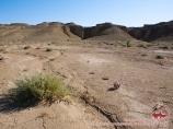 Впадина Мингбулак. Пустыня Кызылкум. Узбекистан