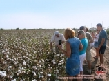 Uzbek cotton. Cotton production in Uzbekistan