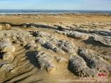 Экологический регион Аральского моря