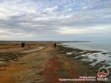 Mar Aral