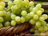 Uvas de Uzbekistán. Frutos de Uzbekistán
