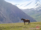Horse on the Lukovaya meadow. Lenin peak, Pamir, Kyrgyzstan
