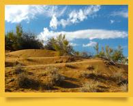 Кызылкумский государственный тугайно-песчаный заповедник
