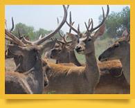Нижне-Амударьинский государственный биосферный резерват
