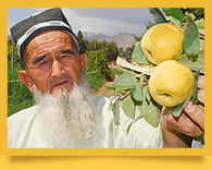 Quince: A Tart Autumn Fruit