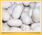 Seidenproduktion in Usbekistan