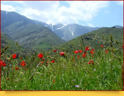 Nurata Mountains