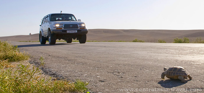 В самом сердце пустыни Кызылкум