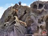 Окрестности озера Тулпаркёль. Чон-Алайская долина, Памир, Кыргызстан
