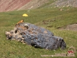 Marmots on the Lukovaya meadow. Lenin peak, Pamir, Kyrgyzstan