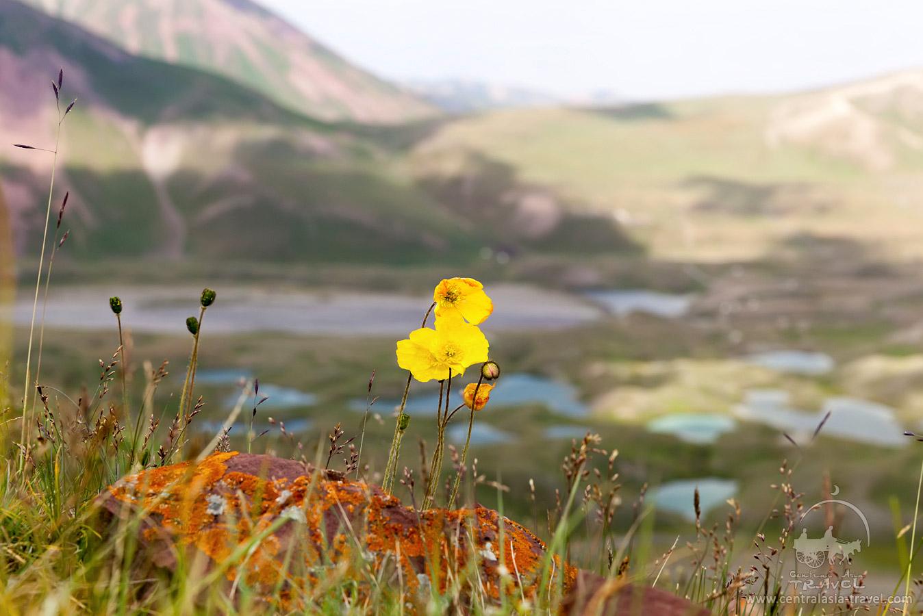 Environs du camp de base (3600 m)