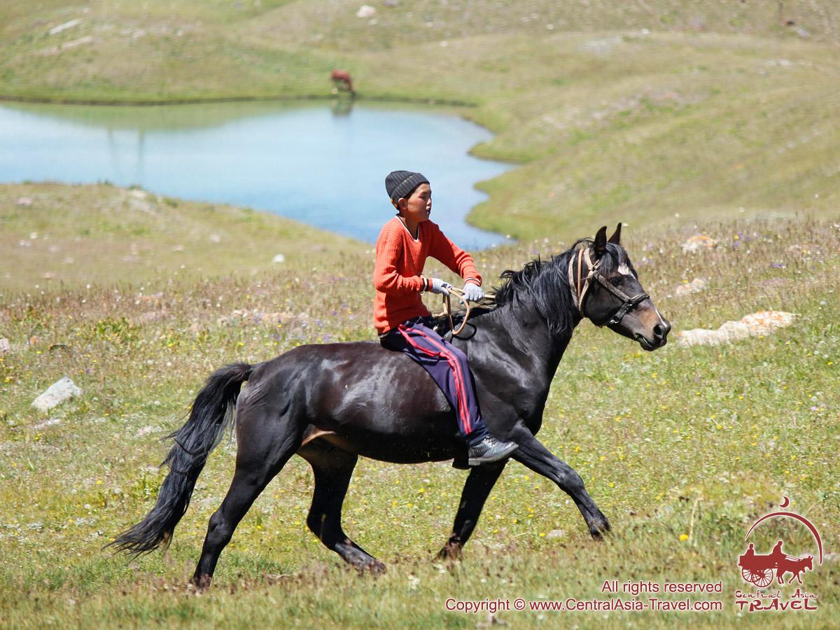 Джайлоо. Окрестности озера Тулпаркёль. Чон-Алайская долина, Памир, Кыргызстан