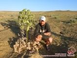 Die Kyzylkum-Wüste. Usbekistan