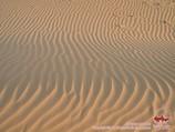 Пески Кызылкума. Узбекистан