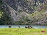 Лошади на озере Каракамыш. Тянь-Шань, Кыргызстан