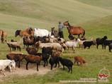 Жизнь кочевников. Кыргызстан