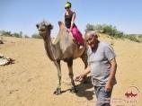 Прогулка на верблюдах вблизи юртового лагеря «Айдар». Узбекистан