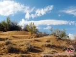 Пустыня Кызылкум. Узбекистан