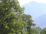 Поселок Узгарыш. Баткенский район, Кыргызстан